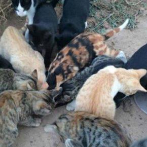 Ciudadanos solicita implantar el proyecto CES para controlar las colonias de gatos en los barrios de Lleida