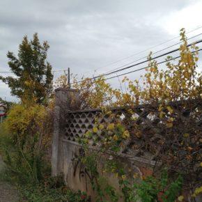Ciudadanos Lleida pide establecer un calendario para limpiar las entradas de acceso a la ciudad