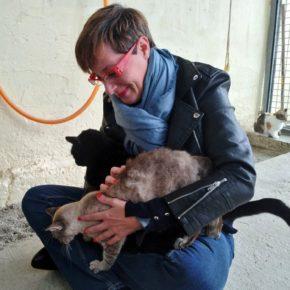 Adopta un gato, no lo compres