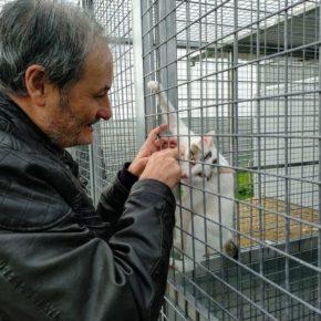 """Daniel Rubio: """"Adopta un gato, no lo compres"""""""