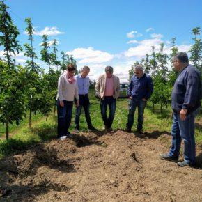 """Ángeles Ribes: """"A causa de la inacción del Govern de la Generalitat, los agricultores de la Horta siguen padeciendo daños en sus campos por la sobrepoblación de jabalíes"""""""